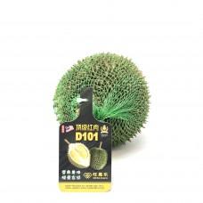 D101 Durian (average 5.5lb)