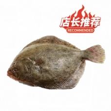 1 Live Turbot (about 1.8-2.2lb)