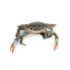 Blue Crab (1 dozen)