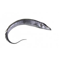 Beltfish(about1-1.3lb)