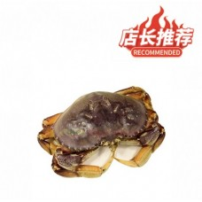 Dungeness Crab - s (about0.5lb)