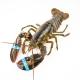 Lobster - S (Average 1-1.4lb/ea)