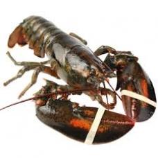 Lobster - L (Average 1.6lb/ea)